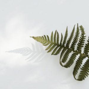 background fern